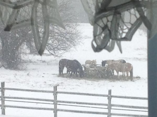 horses-in-the-snow
